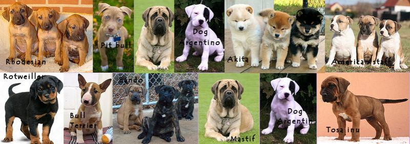 Club Canin des Amis de Tubize - Portail Danger10