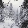 La forêt figée