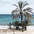 La plage des cocotiers