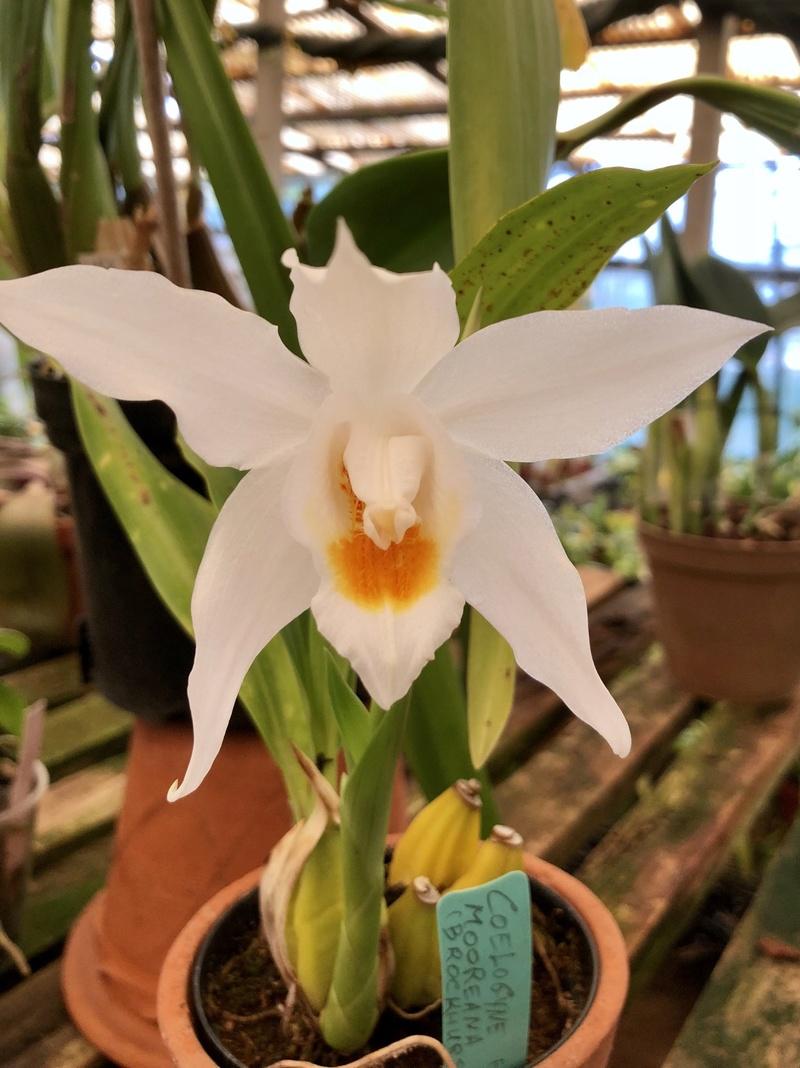 Orchideenzüchter 'Quinta da Boa Vista' in Funchal auf Madeira 032d5610