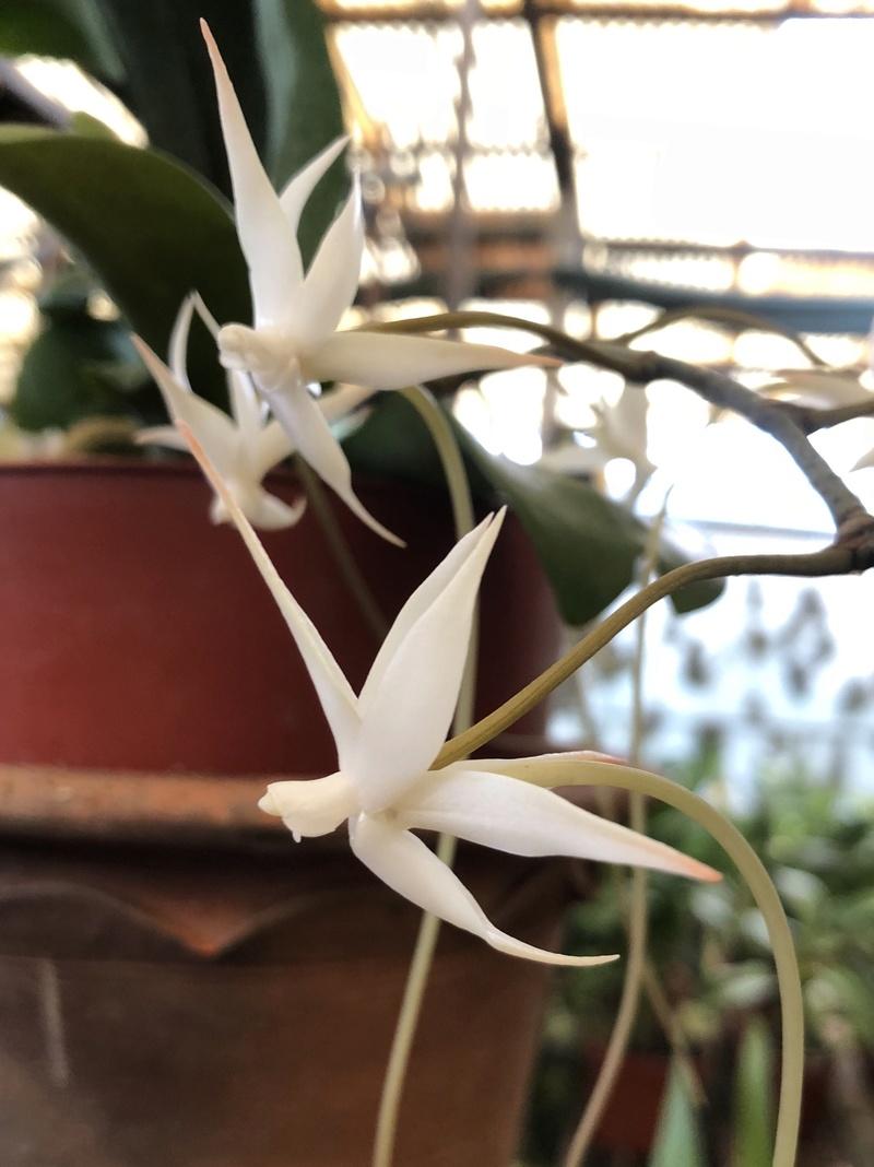 Orchideenzüchter 'Quinta da Boa Vista' in Funchal auf Madeira 0de91310