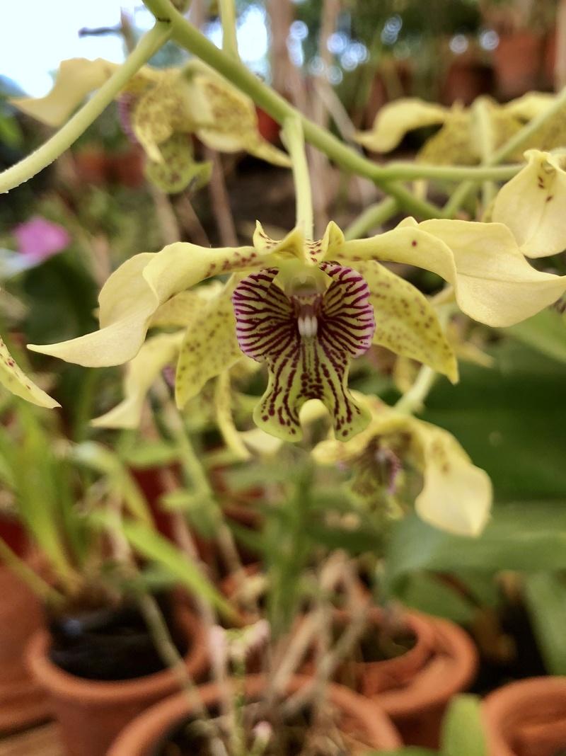 Orchideenzüchter 'Quinta da Boa Vista' in Funchal auf Madeira 15d35d10