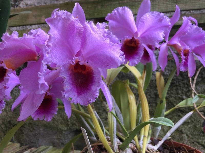 Orchideenzüchter 'Quinta da Boa Vista' in Funchal auf Madeira 38fdfc10