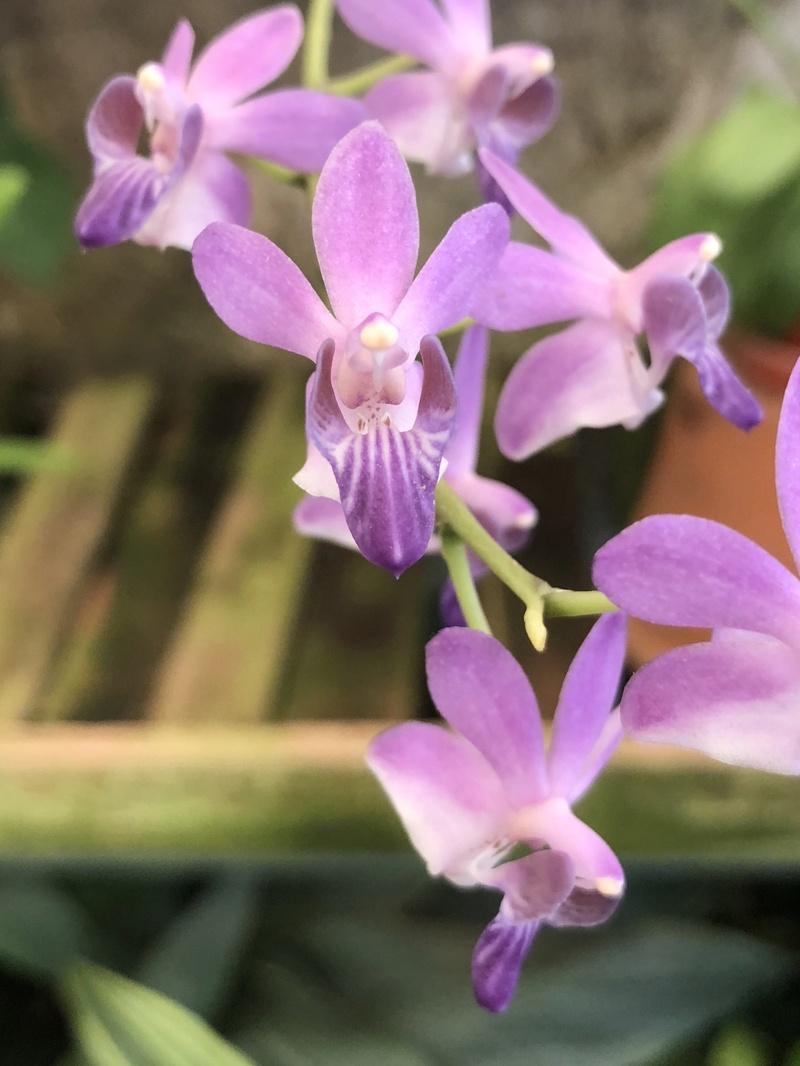 Orchideenzüchter 'Quinta da Boa Vista' in Funchal auf Madeira 39eb4610