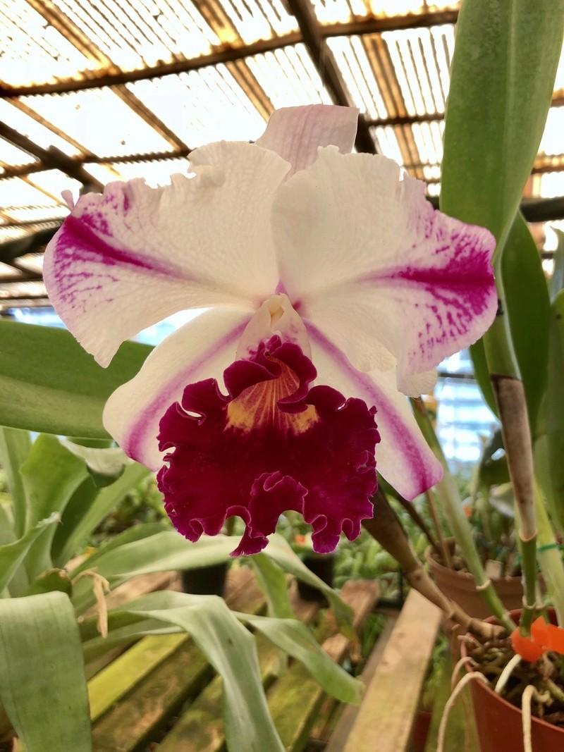 Orchideenzüchter 'Quinta da Boa Vista' in Funchal auf Madeira 4c336810