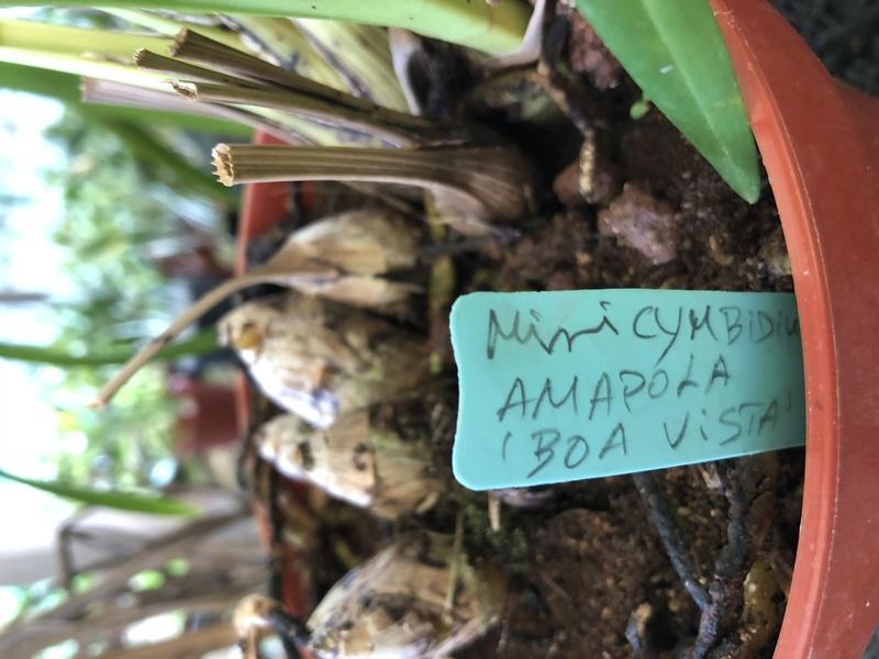 Orchideenzüchter 'Quinta da Boa Vista' in Funchal auf Madeira 707de910