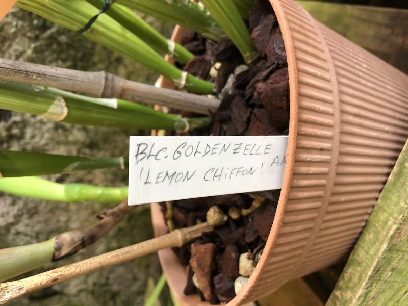Orchideenzüchter 'Quinta da Boa Vista' in Funchal auf Madeira 84068310