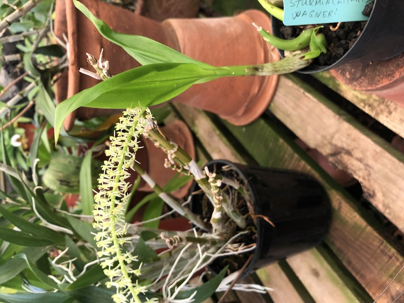Orchideenzüchter 'Quinta da Boa Vista' in Funchal auf Madeira 8a4e0110