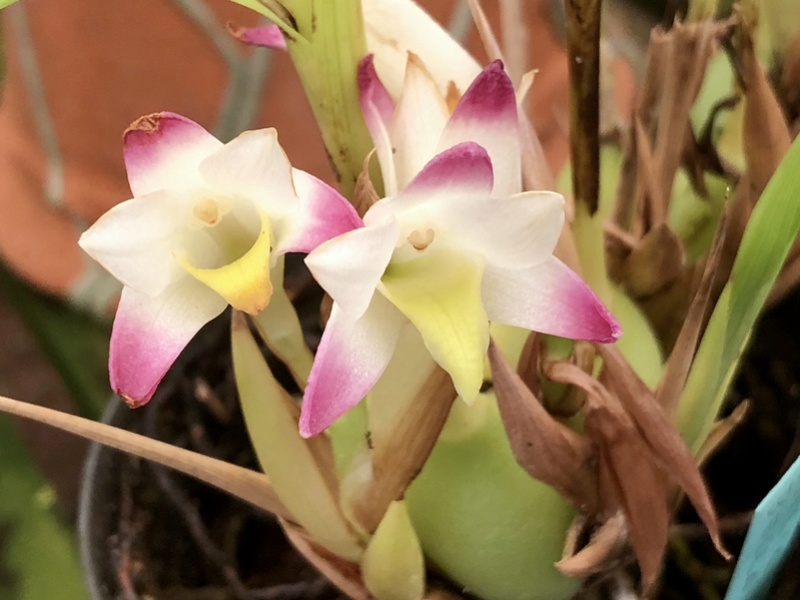Orchideenzüchter 'Quinta da Boa Vista' in Funchal auf Madeira 965b1b10
