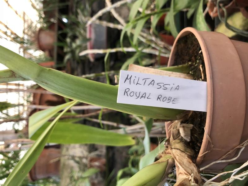 Orchideenzüchter 'Quinta da Boa Vista' in Funchal auf Madeira 987a2f10