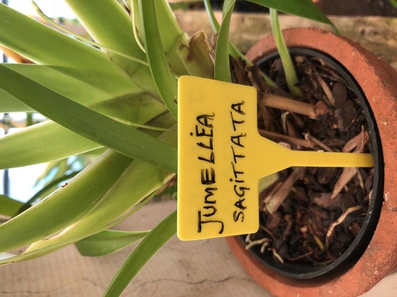 Orchideenzüchter 'Quinta da Boa Vista' in Funchal auf Madeira B759f310