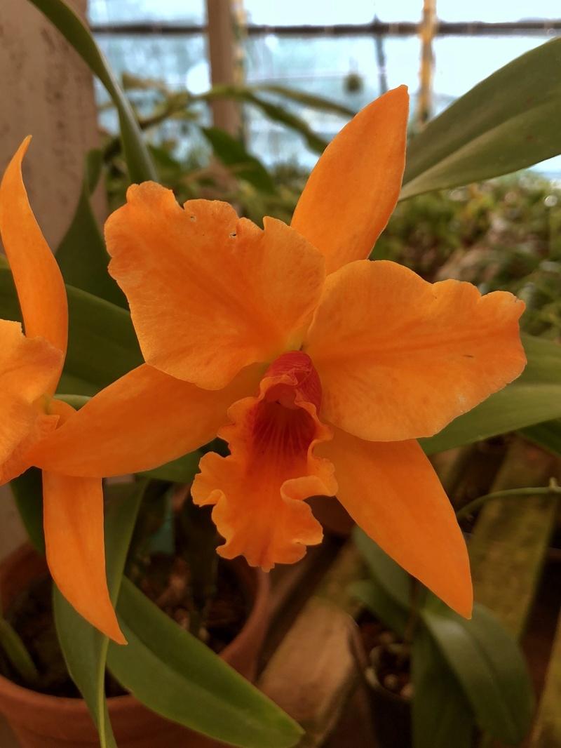 Orchideenzüchter 'Quinta da Boa Vista' in Funchal auf Madeira D5d50210