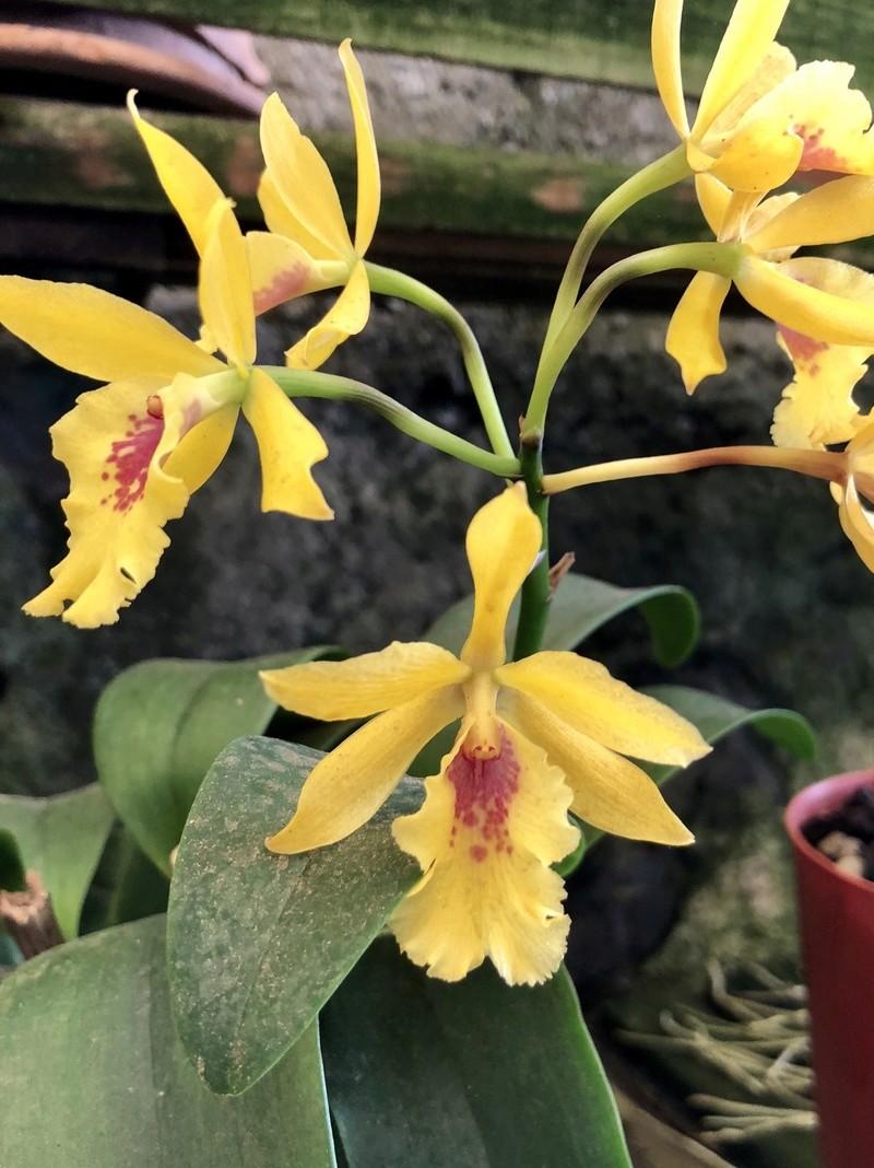 Orchideenzüchter 'Quinta da Boa Vista' in Funchal auf Madeira E2357510