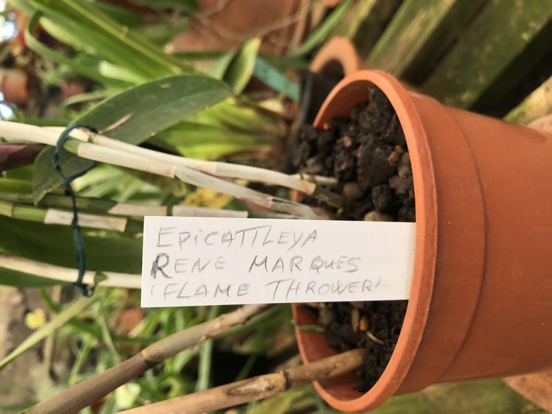 Orchideenzüchter 'Quinta da Boa Vista' in Funchal auf Madeira F264a310