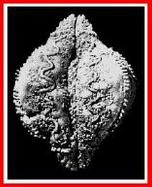 De la grotte CHAUVET à La PASTÈQUE prohibée : la VULVE SACRÉE Sexual16