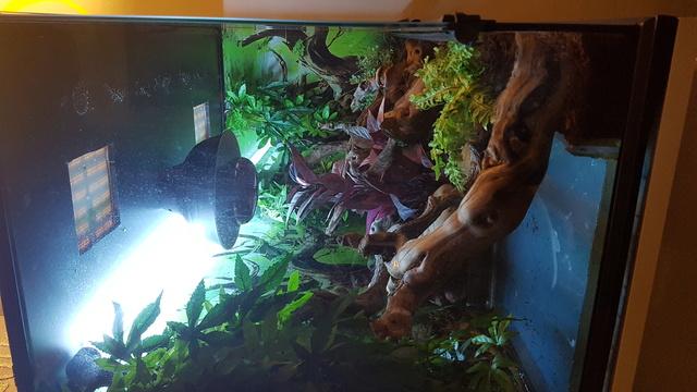 Votre avis pour mon dragon d eau 20171210
