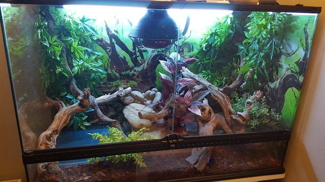 Votre avis pour mon dragon d eau 20171211