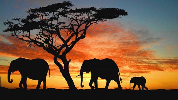 Un elefante ocupa mucho espacio 28-a-e10