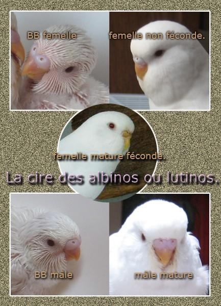 sexe ? Albino10