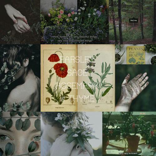 L'herbier  Saugic10