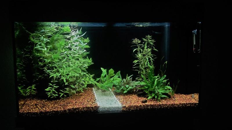 Population pour 120L planté, 1er aquarium 2018_010