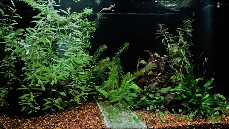 Population pour 120L planté, 1er aquarium 2018_013