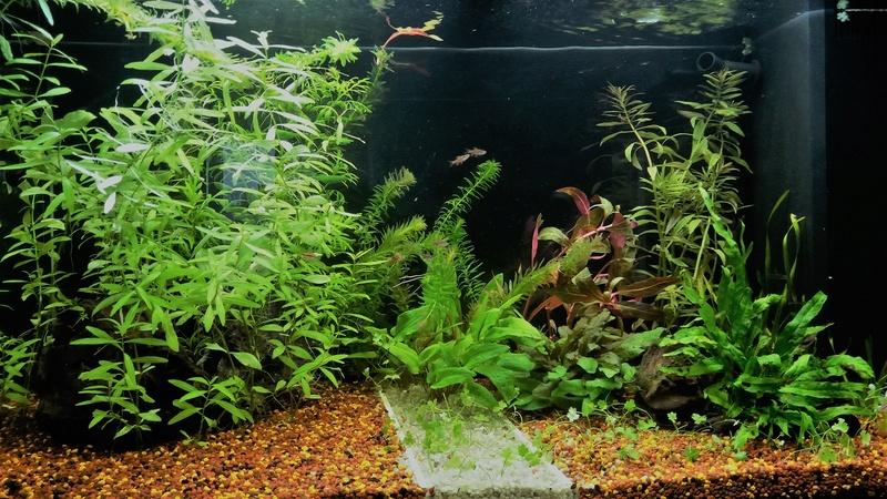 Population pour 120L planté, 1er aquarium 2018_014
