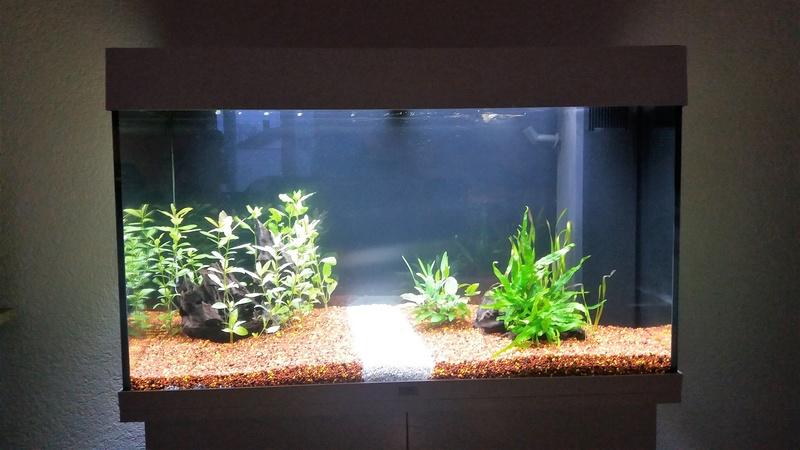 Population pour 120L planté, 1er aquarium Aqua_p10