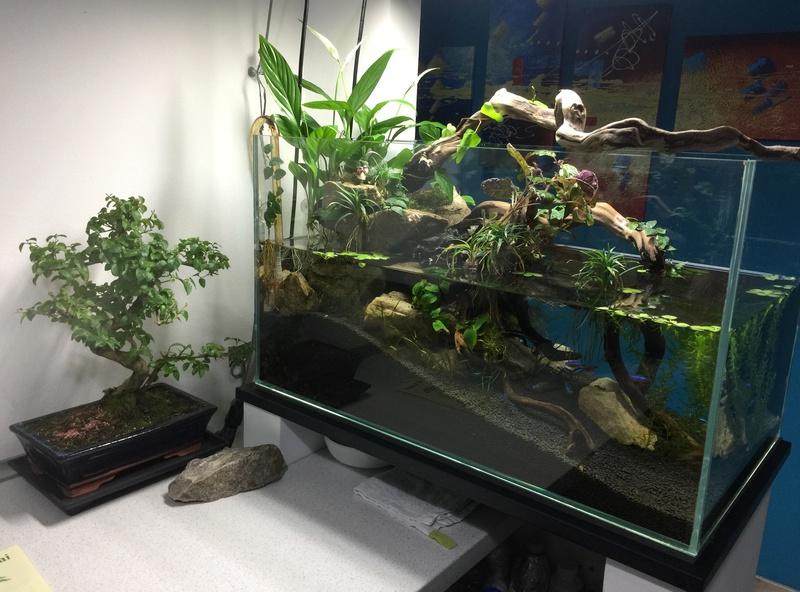 Primo bonsai, Ligustrum Sinensis Img_5112