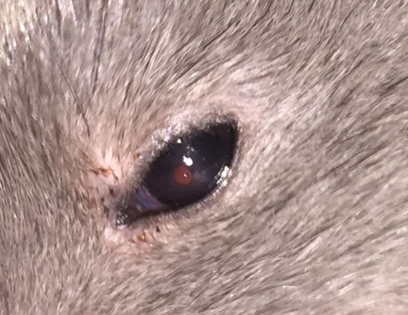 Bouton rouge dans l'œil  657dc410