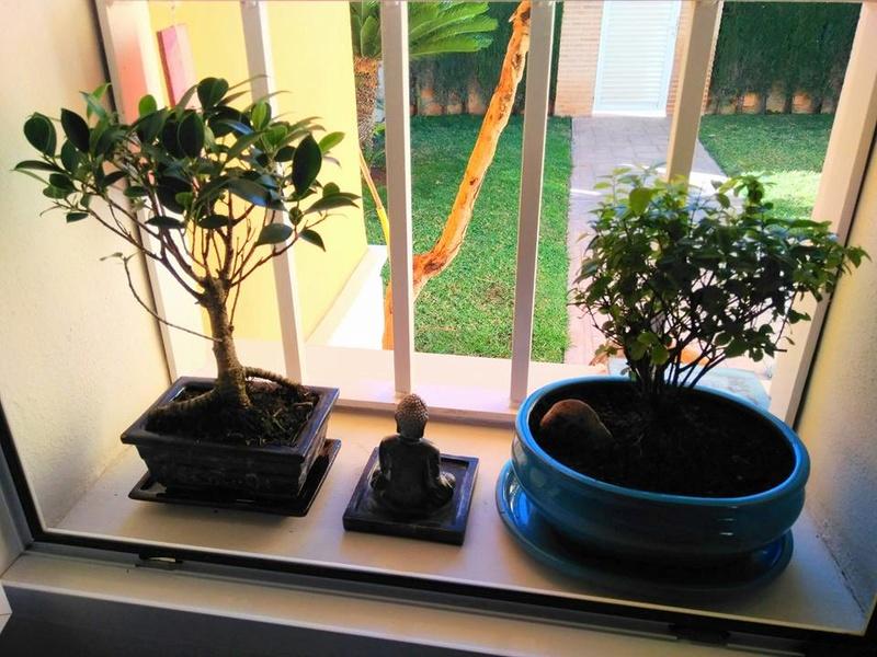 Mis primeros bonsais! 25994911