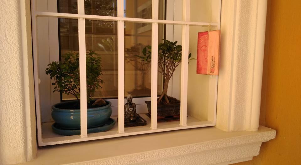 Mis primeros bonsais! 26167311