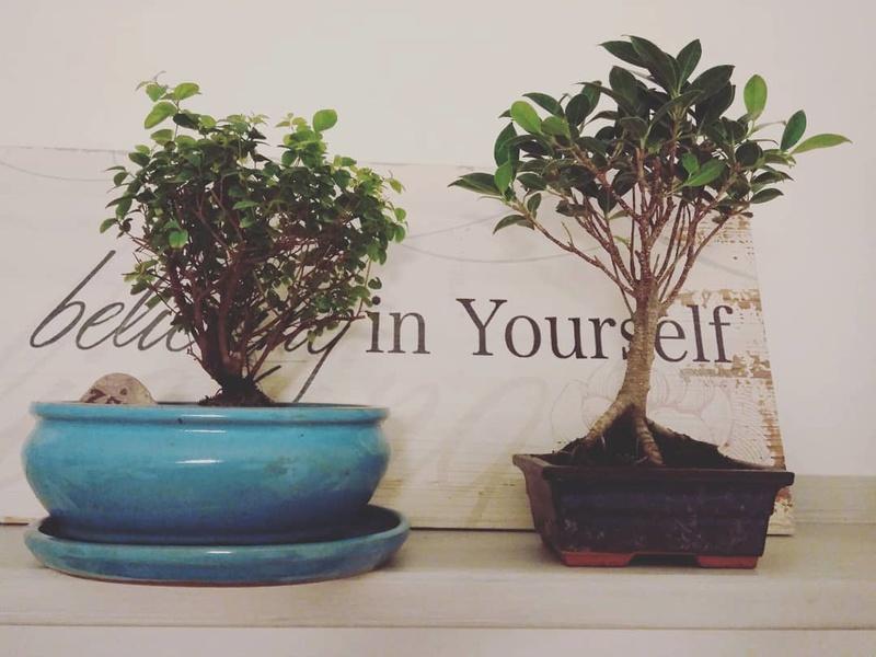 Mis primeros bonsais! 26173110