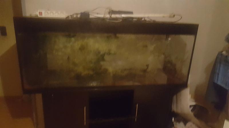 besoin d'aide pour mon aquarium 20180211