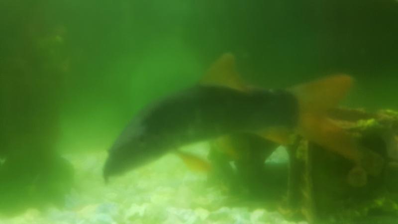 besoin d'aide pour mon aquarium 20180212