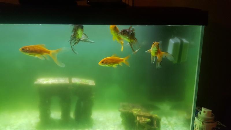 besoin d'aide pour mon aquarium 20180213