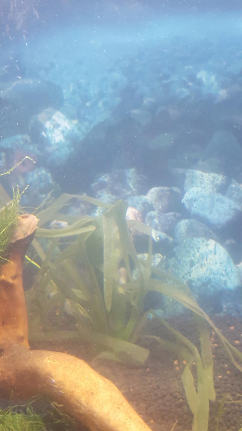 Aquarium crevette 20180312