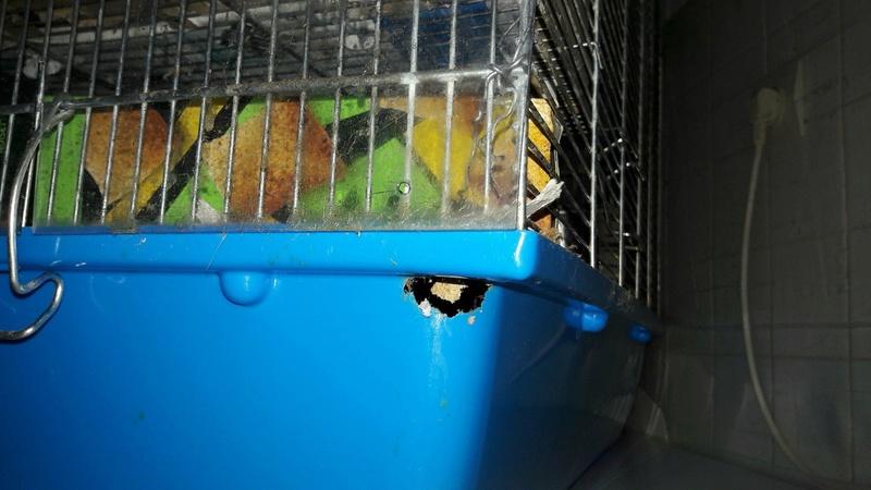 Conseils cage Bubu XL  26540210