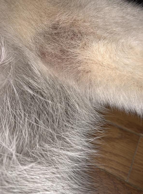 Itchy elbows D419d610