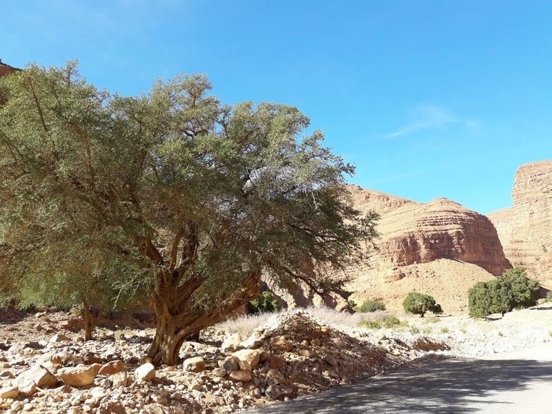 [Carburant, Routes, Police]  Nouvelle route de Tafraoute à Âit-Herbi sur la N 12  20180118
