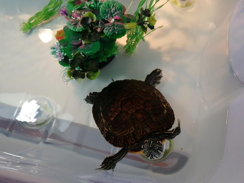 Instalacoes da minha tartaruga  Img_2011