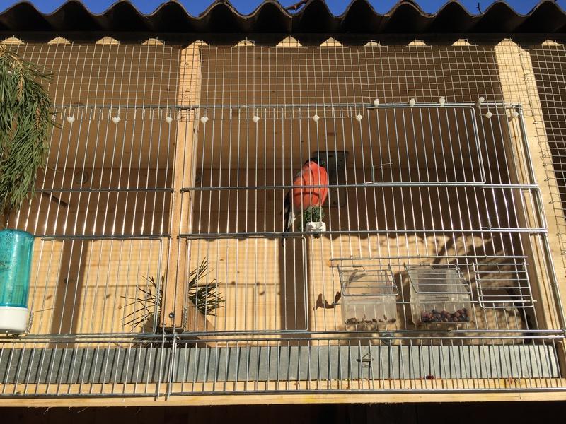 Mes oiseaux et mes installations d'élevage Img_0114