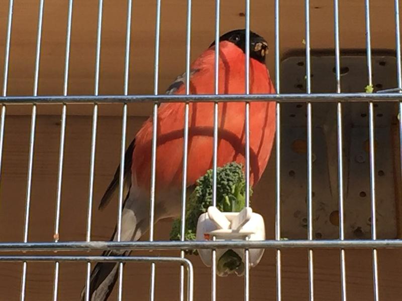 Mes oiseaux et mes installations d'élevage Img_0117