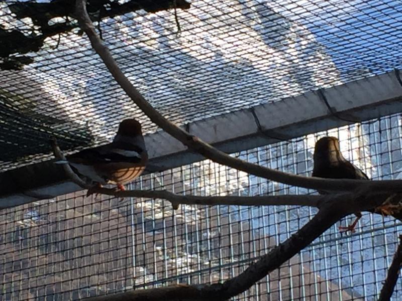 Mes oiseaux et mes installations d'élevage Img_0118