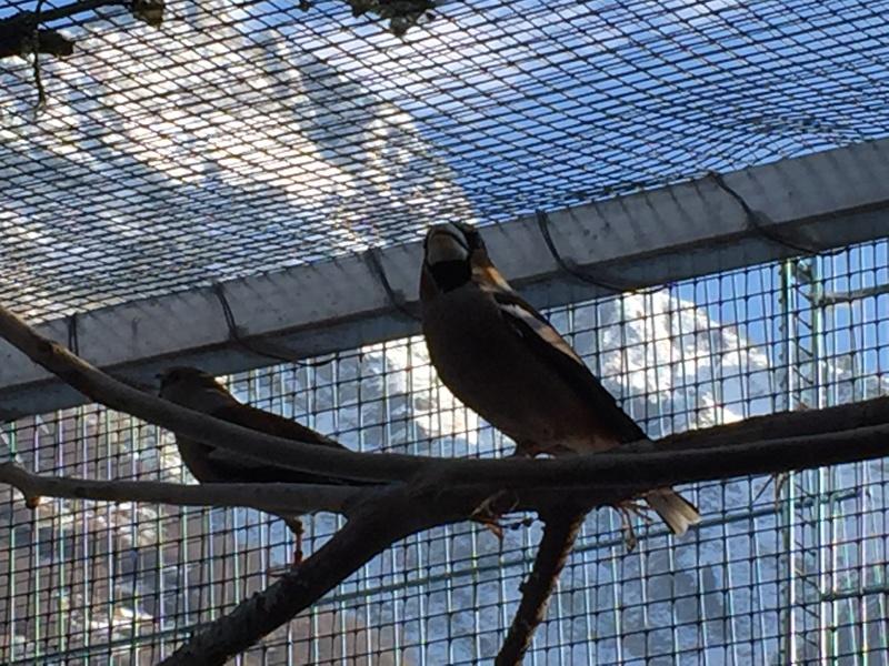 Mes oiseaux et mes installations d'élevage Img_0121