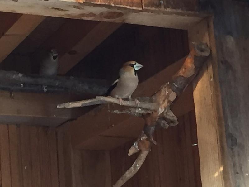 Mes oiseaux et mes installations d'élevage Img_0123