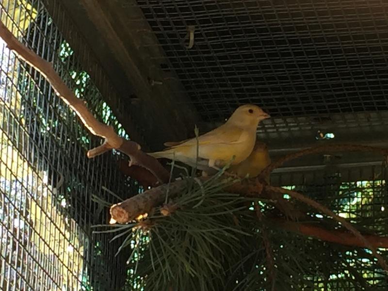 Mes oiseaux et mes installations d'élevage Img_0124