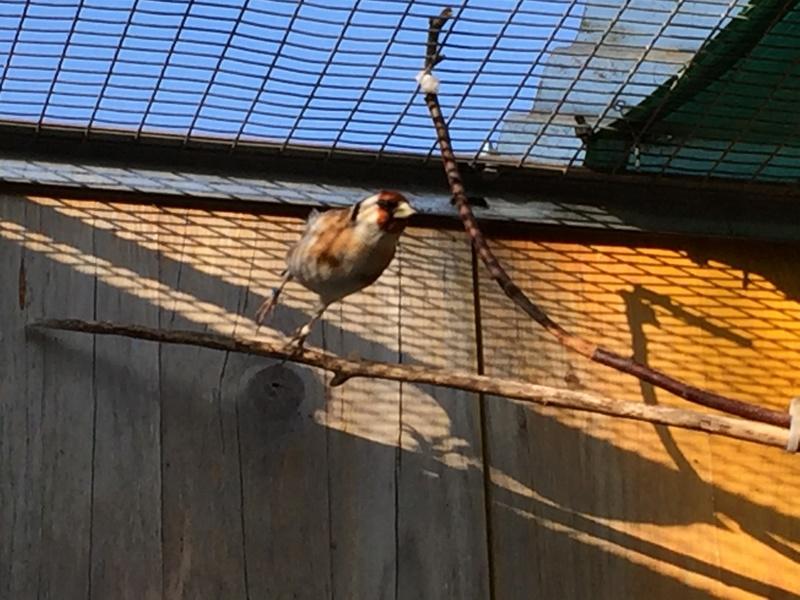Mes oiseaux et mes installations d'élevage Img_0125