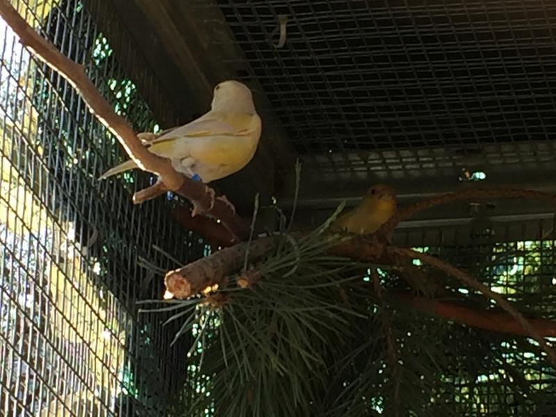 Mes oiseaux et mes installations d'élevage Img_0126