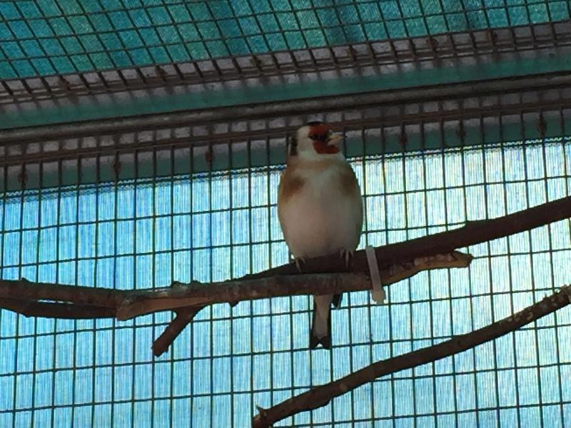 Mes oiseaux et mes installations d'élevage Img_0127